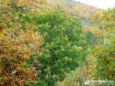 Pico Cerillón - La Morra - Montes de Toledo; excursiones desde madrid de un dia